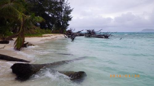 サイパン格安旅行の旅 2日目 マニャガハ島 流木