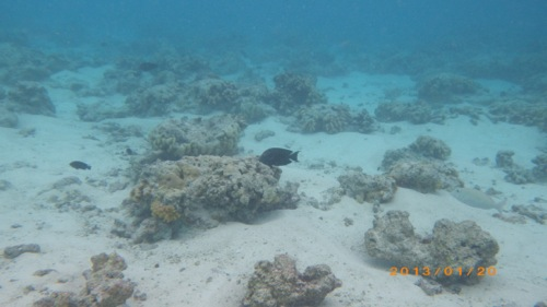 サイパン格安旅行の旅 2日目 マニャガハ島 海の中1