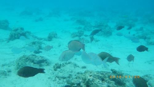 サイパン格安旅行の旅 2日目 マニャガハ島 海の中2