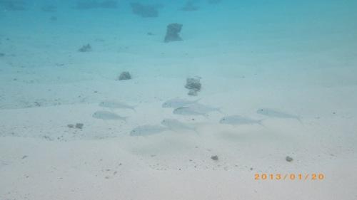 サイパン格安旅行の旅 2日目 マニャガハ島 海の中4