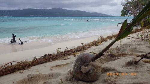 サイパン格安旅行の旅 2日目 マニャガハ島 ヤシの実から木