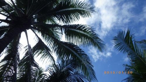 サイパン格安旅行の旅 2日目 マニャガハ島 ヤシの木から青い空