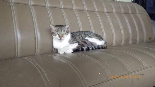 サイパン格安旅行の旅 3日目 Masa Dive Saipanの猫